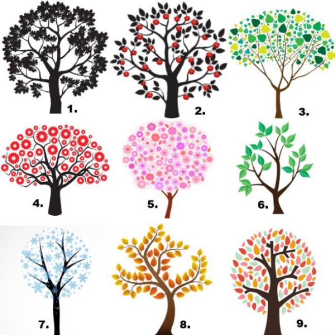 Válassz egy neked tetsző fát, és tudd meg a jelentését!