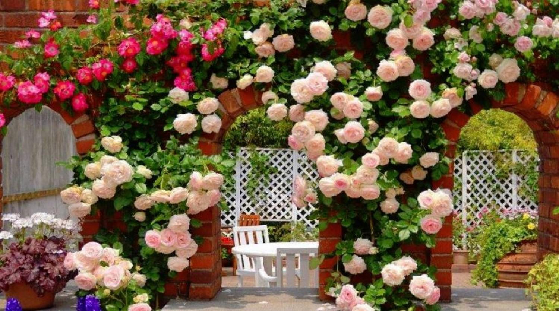A sikeres kertészek három titka