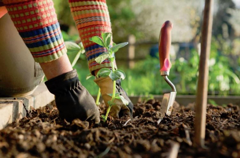 Nagyon szerencsés vagy, ha a kertészkedés a hobbid