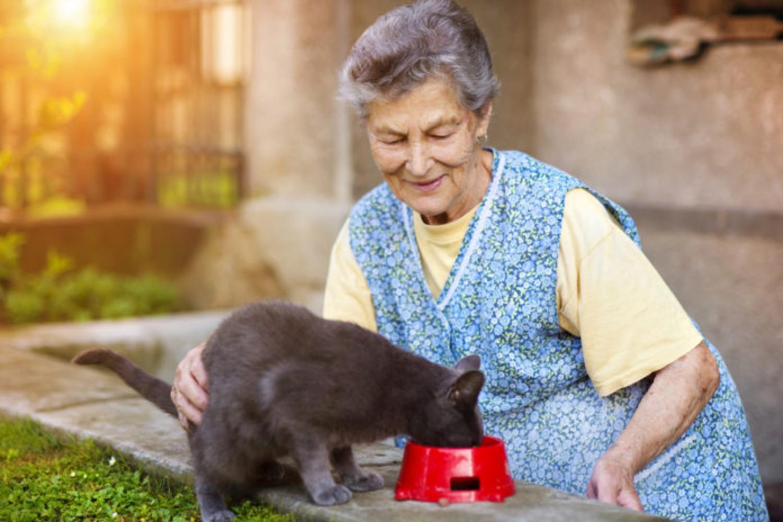 A macska mentette meg az idős házaspár életét
