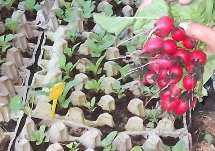 Így termessz magadnak retket egy végtelenül egyszerű módszerrel