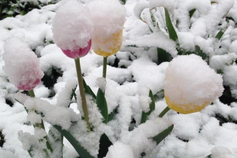 Eddig tart az áprilisi tél