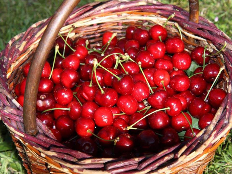 Ha kukacos a cseresznyéd ne dobd ki! Mutatjuk nagyanyáink trükkjét!