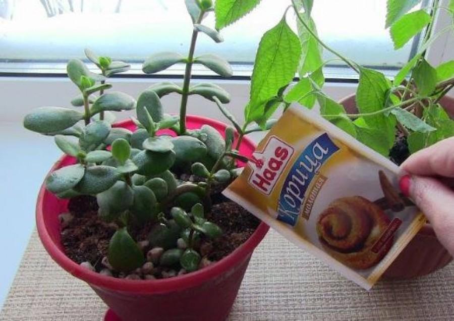 Szórj fahéjat a szobanövényeid földjére