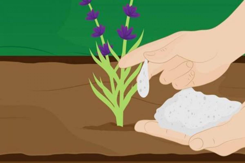 9 ravasz kerti praktika szódabikarbónával